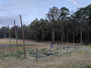 Building Hop Trellises With Our Bare Hands