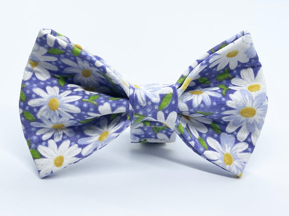Daisy on Purple Doggy Bowtie