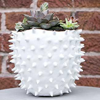 Cacti Ceramic Pot