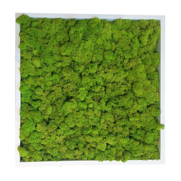 Moss Tile Wall Decor White Frame KRISLYN Wall Decor - 1