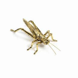 Gold Decorative Insects Accessories Zodax Grasshopper