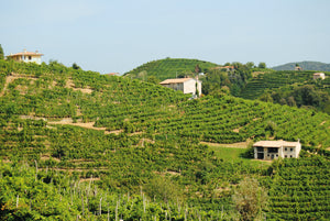 The Gentlemen of Verona - Valpolicella and it's Wines