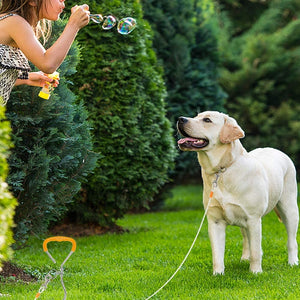 Dog Tie Out Cable and Stake with Anti-Rust Spiral Ground Anchor