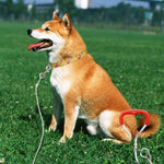Load image into Gallery viewer, Dog Tie Out Cable and Reflective Stake 30 ft Outdoor for small to medium dogs