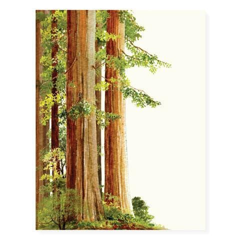 Redwood Trees Card