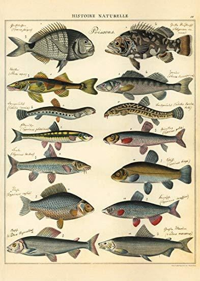 "Natural History Fish 20""x28"" Sheet"
