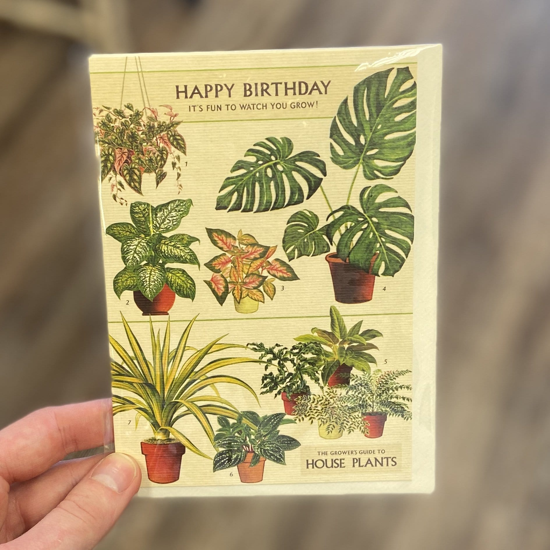 House Plants Birthday Card