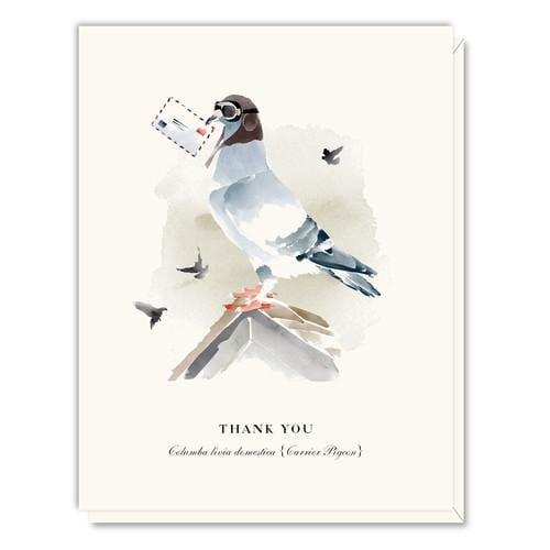 Driscoll Design Watercolor Thank You Boxed Set
