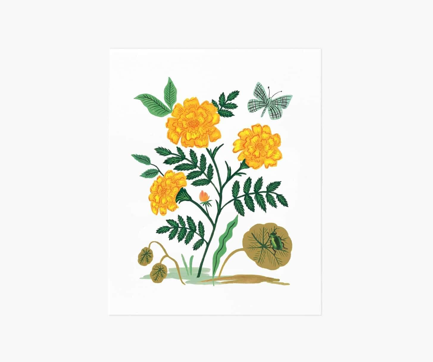 French Marigold Art Print 16x20