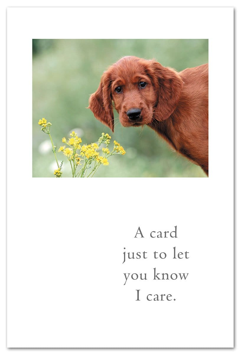 Concerned Retriever Card