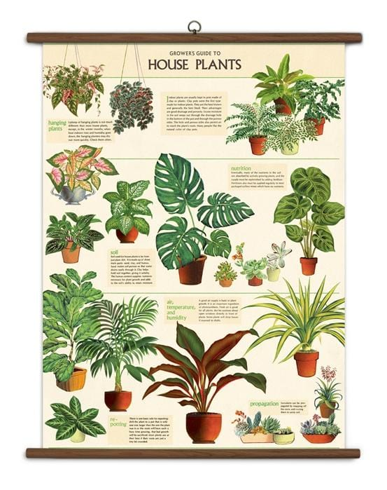 Vintage School Chart House Plants