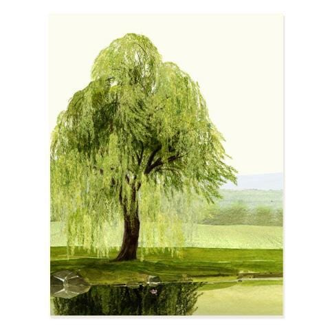 Whispering Willow