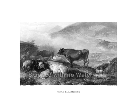 "CATTLE EARLY MORNING Engraving Repro 11""x14"" $39.95"
