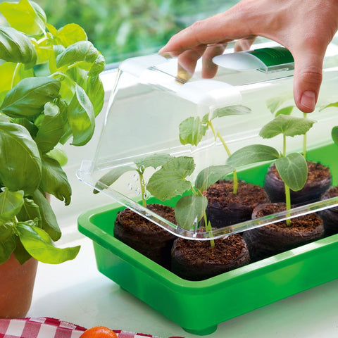 Plant seeds pot seed vegetable seeds garden how to grow