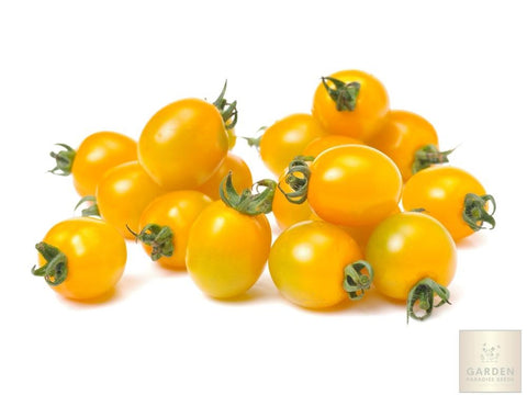 buy garden seeds online vegetable seeds herb seeds exotic seeds palms tomato
