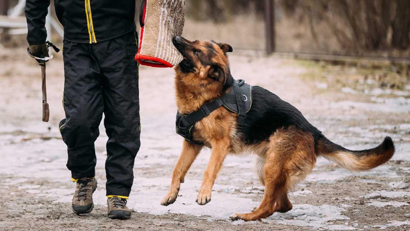 How To Choose The Best Anti-Anxiety Jacket For Dogs - Wildog