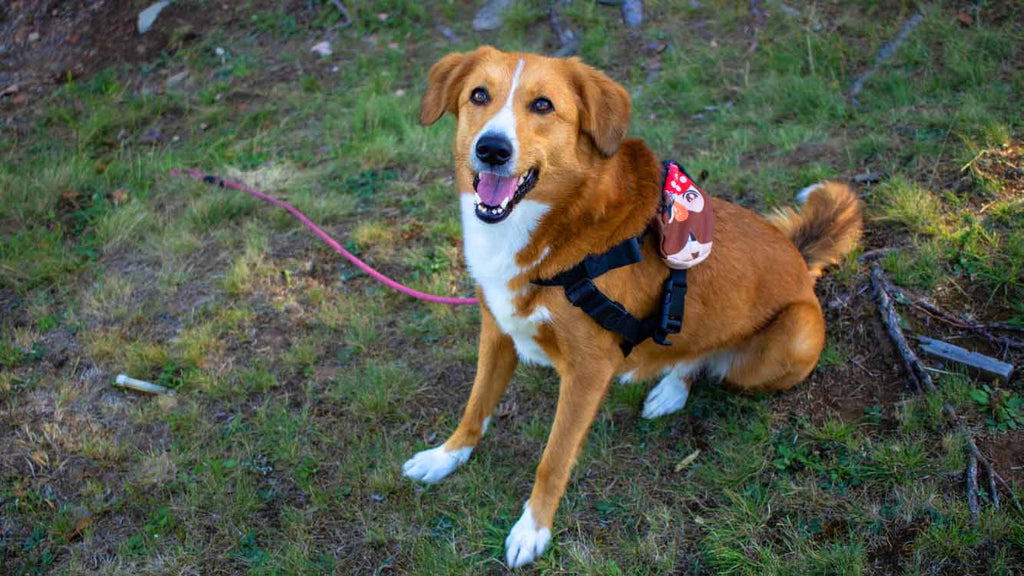 No-Pull Harness For Your Dog - Wildog