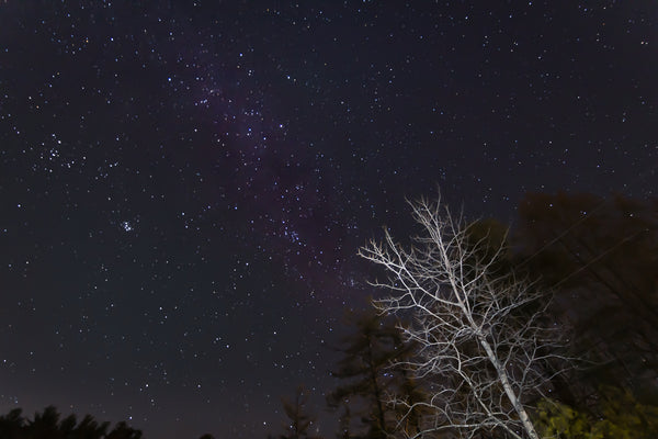 A blurry image of the night sky and a dead tree