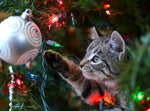 8 Holiday Dangers for Cats