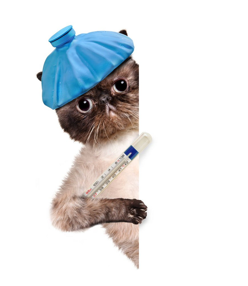 The Simple, Safe, Veterinarian-Approved Way to Take Your Kitty's Temperature