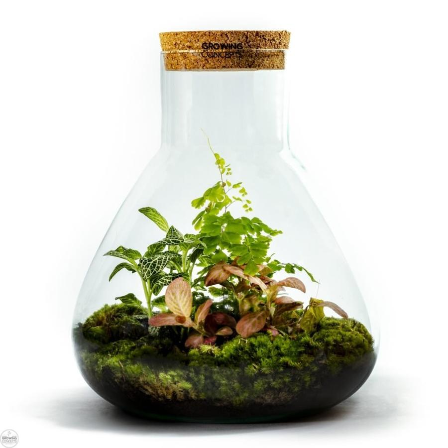 Growing Concepts - Erlenmeyer Large
