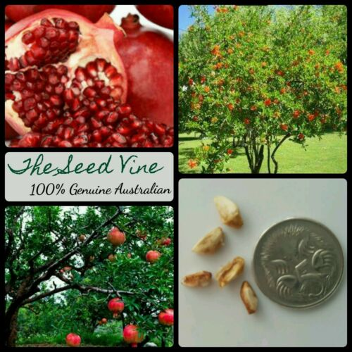 20+ Organic Pomegranate Seeds (Punica granatum)