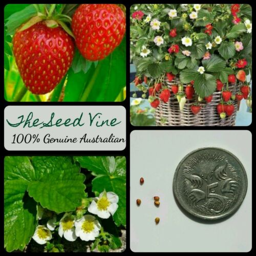 20+ Organic Strawberry Seeds (Fragaria x ananassa)