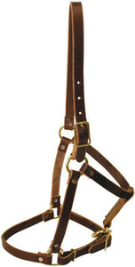 Riveted Leather Halter, Yearling
