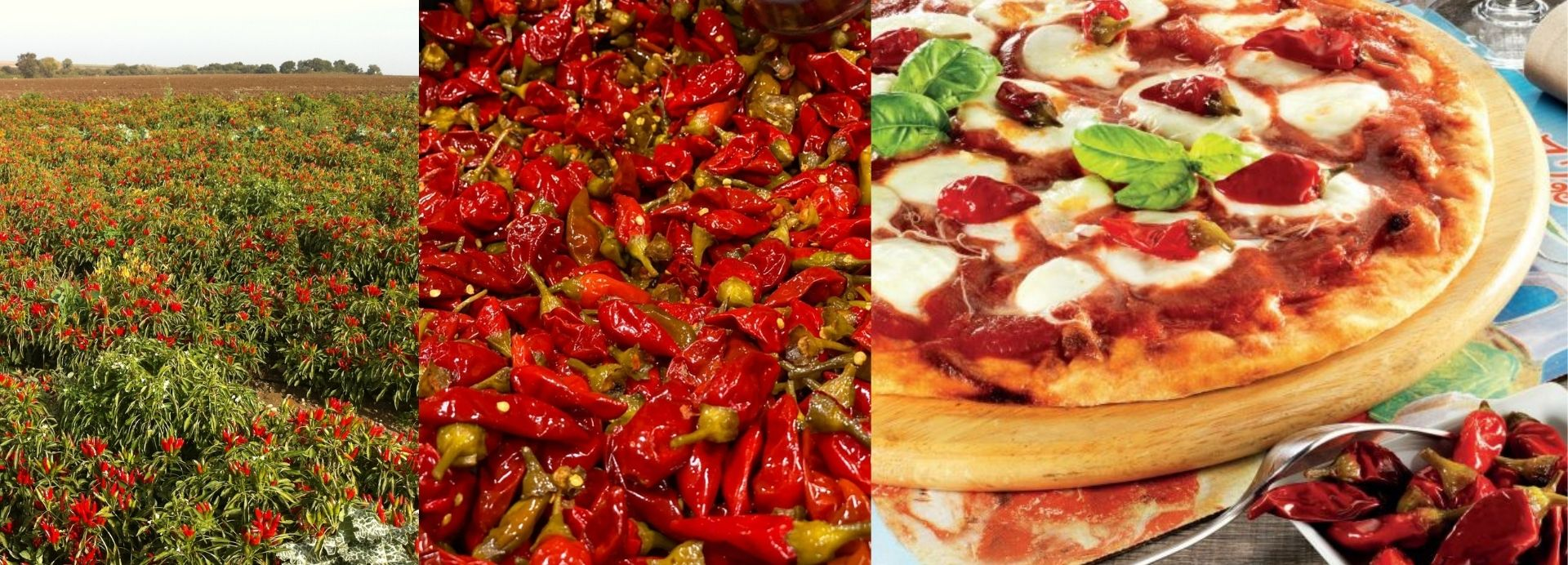 Tutto Calabria Calabrian Hot Chili Peppers | Wholesale Italian Food