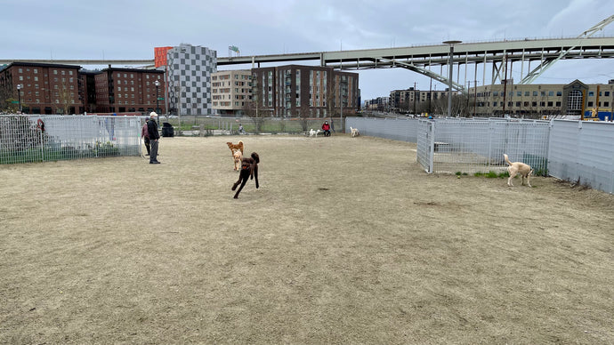Fields Park, Pearl District (1/63)