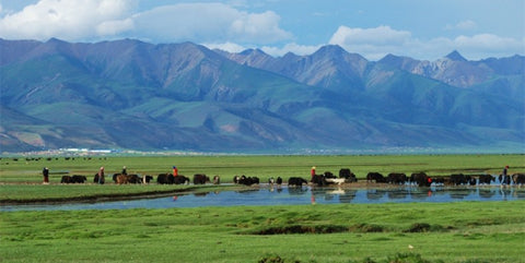 The high altitude plains of Tibet