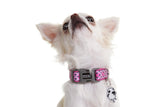 Neoprene Collar - Toto