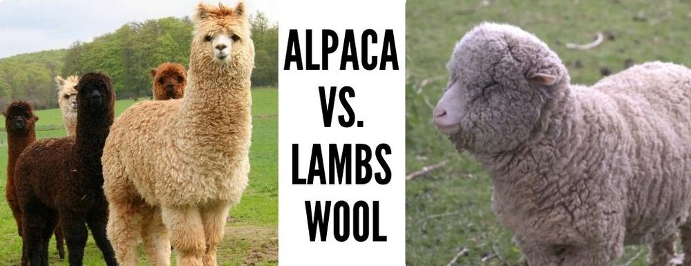 ALPACA VS. LAMBS WOOL