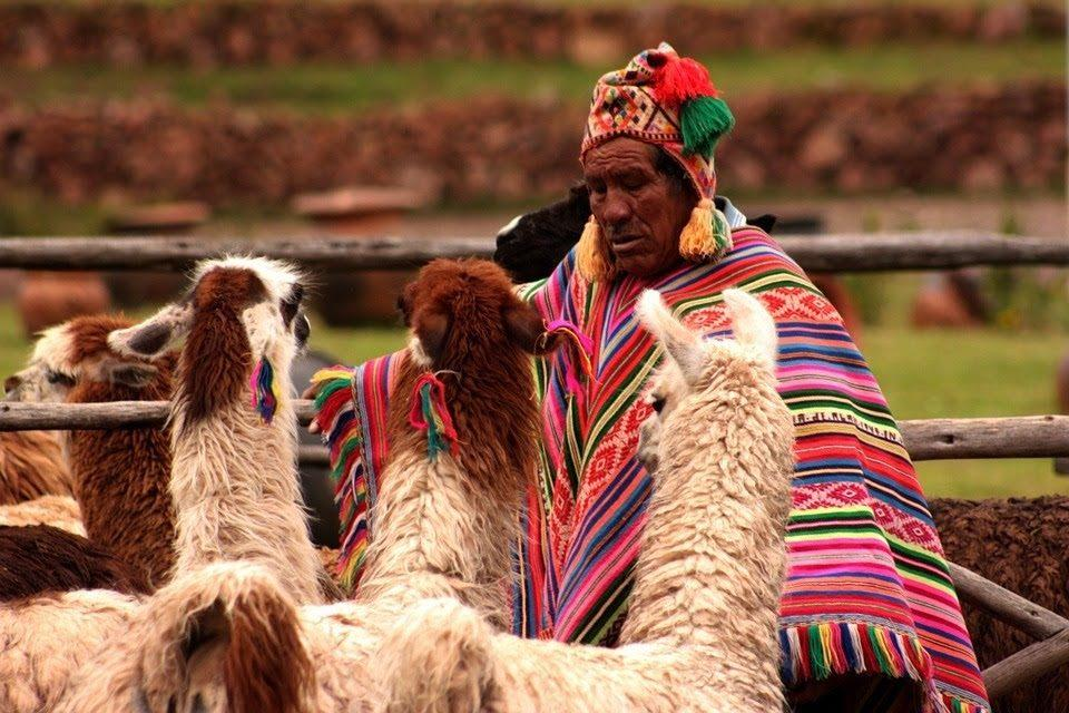 GETTING TO KNOW ALPACA FARMING