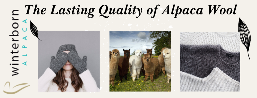 THE LASTING QUALITY OF ALPACA WOOL