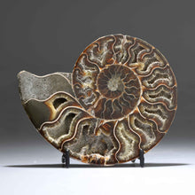 Ammonite Small Form | Sedona Crystal Vortex