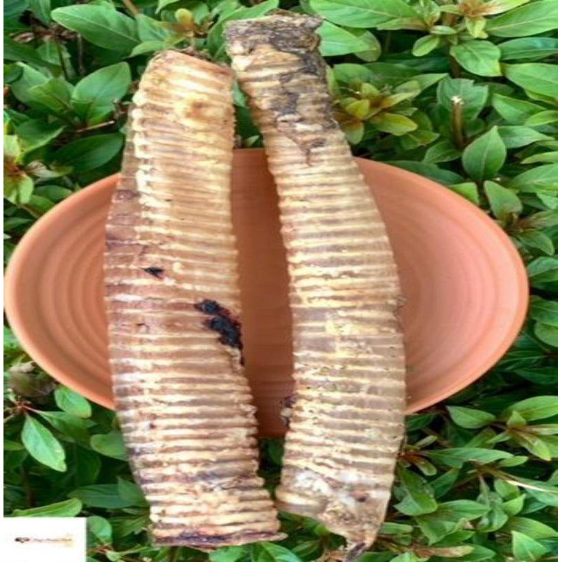 Dehydrated Buffalo Trachea (Large) - Dogs Dream Food