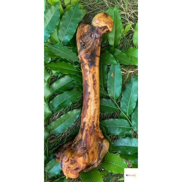 Natural Dehydrated Big Bone ( 14'' - 16'') - Dogs Dream Food