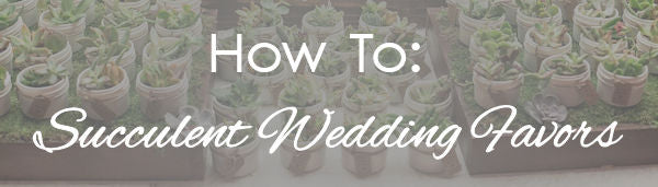 How to succulent wedding favors