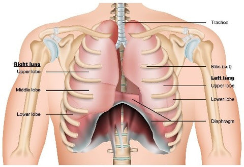 Chest Therapy in Singapore Orchard