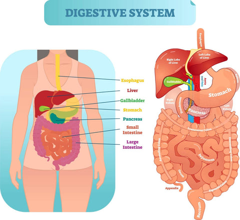 Gastrointestinal Therapy in Singapore Orchard