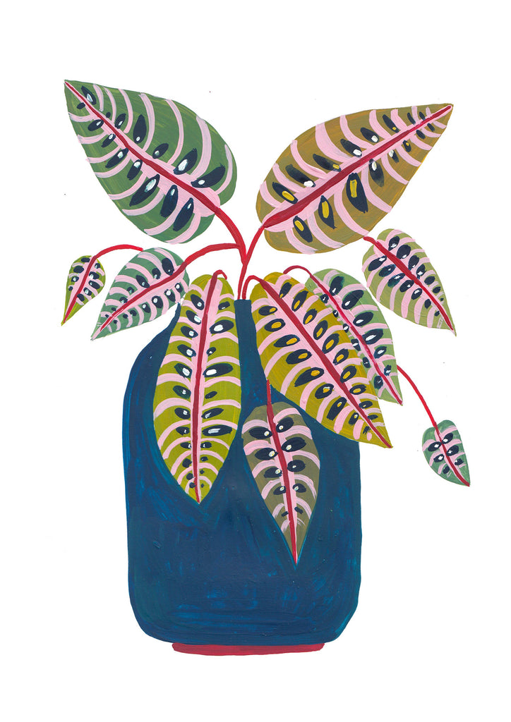 Potted Prayer Plant - Amber Davenport