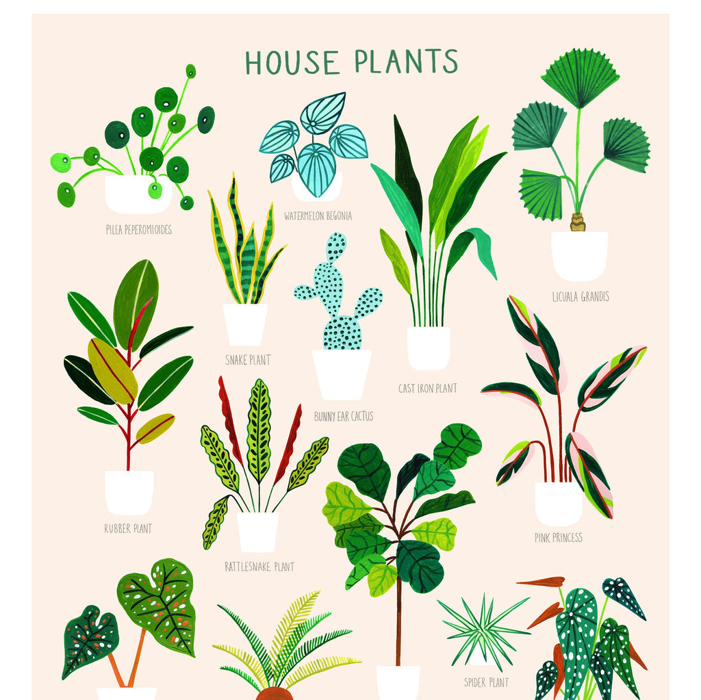 House Plants on Pink - Amber Davenport