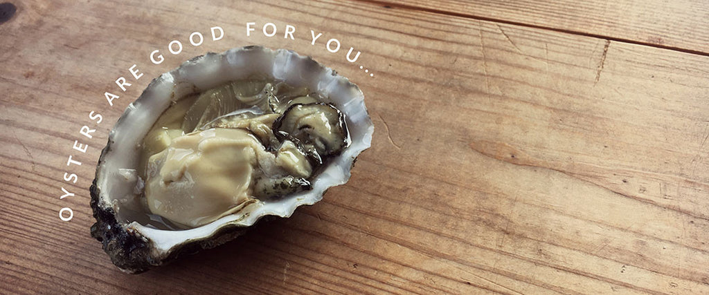 Why oysters are good for you