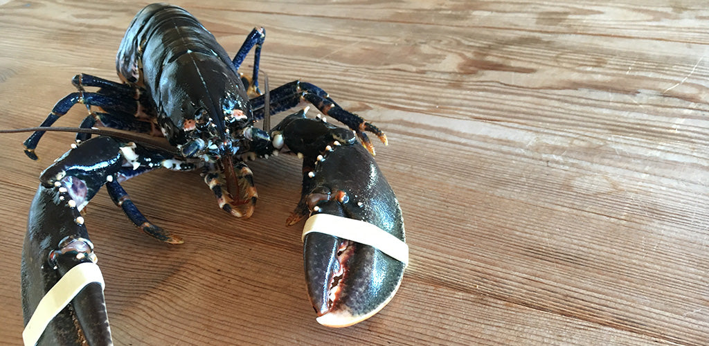 The Illusive Native Lobster