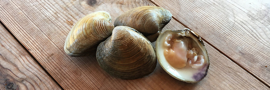 NEW IN: Hard Shell Clams