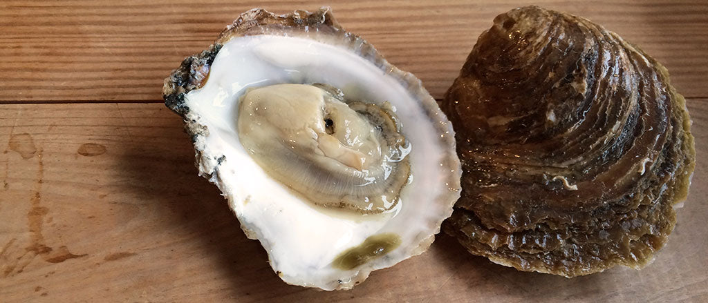 Goodbye Native Oysters!