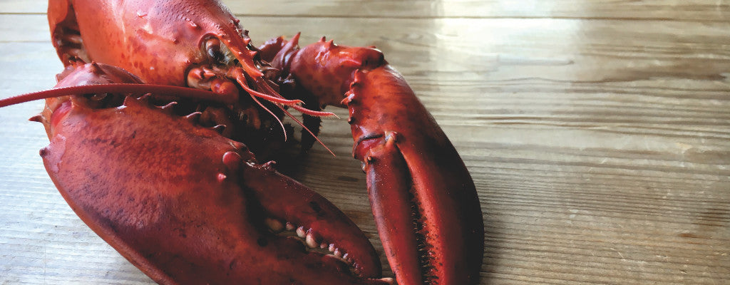 Let's Talk Canadian Lobsters