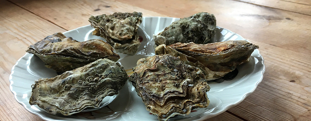 How To Store Oysters At Home