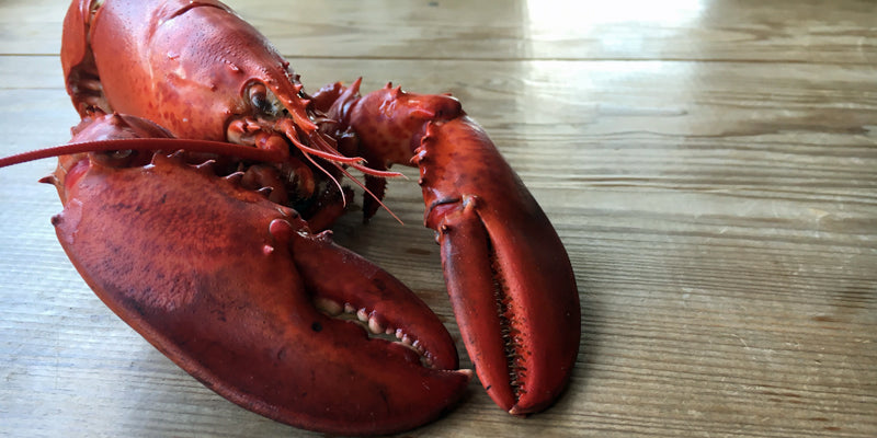 The little lobster - Canadian Canner